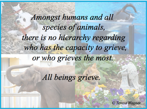 All Animals Grieve