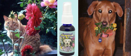 Collage - Morgan, Animal Rescue Formula and Gracie