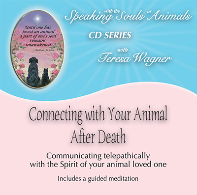 Connecting with the Soul of Your Animal After Death
