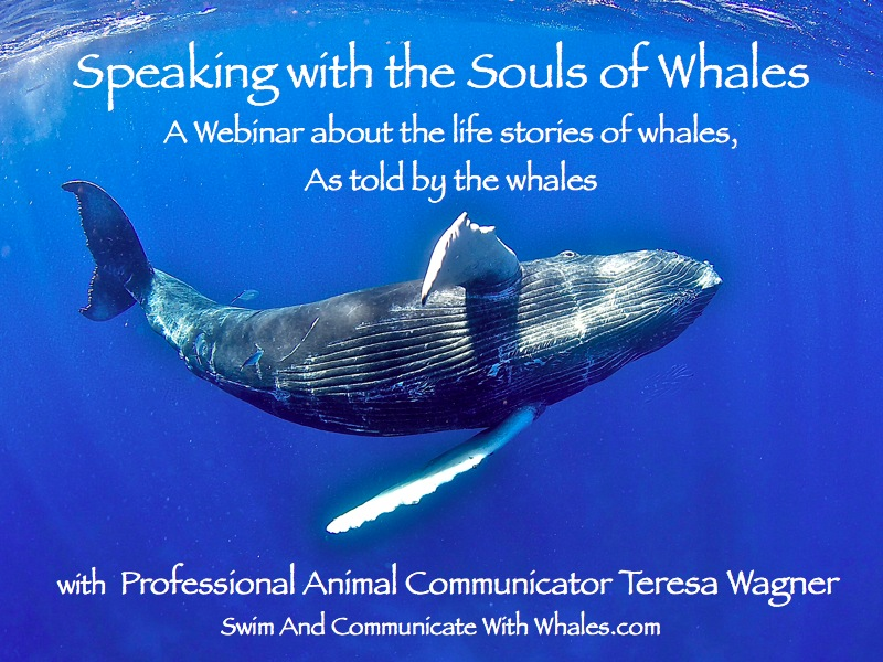 Whale_Webinar_Cover_Slide_copy