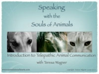 Keynote Animal Communication
